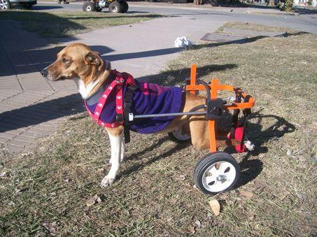 Realizar n en san juan el primer encuentro de perros con for Carritos para perros