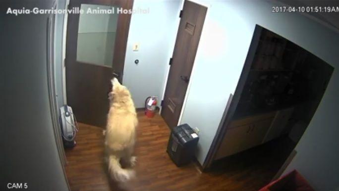 El gran escape de un perro — Video viral