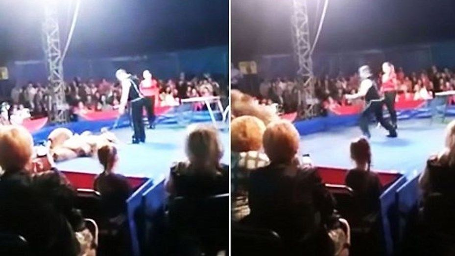 Oso ataca al público en circo