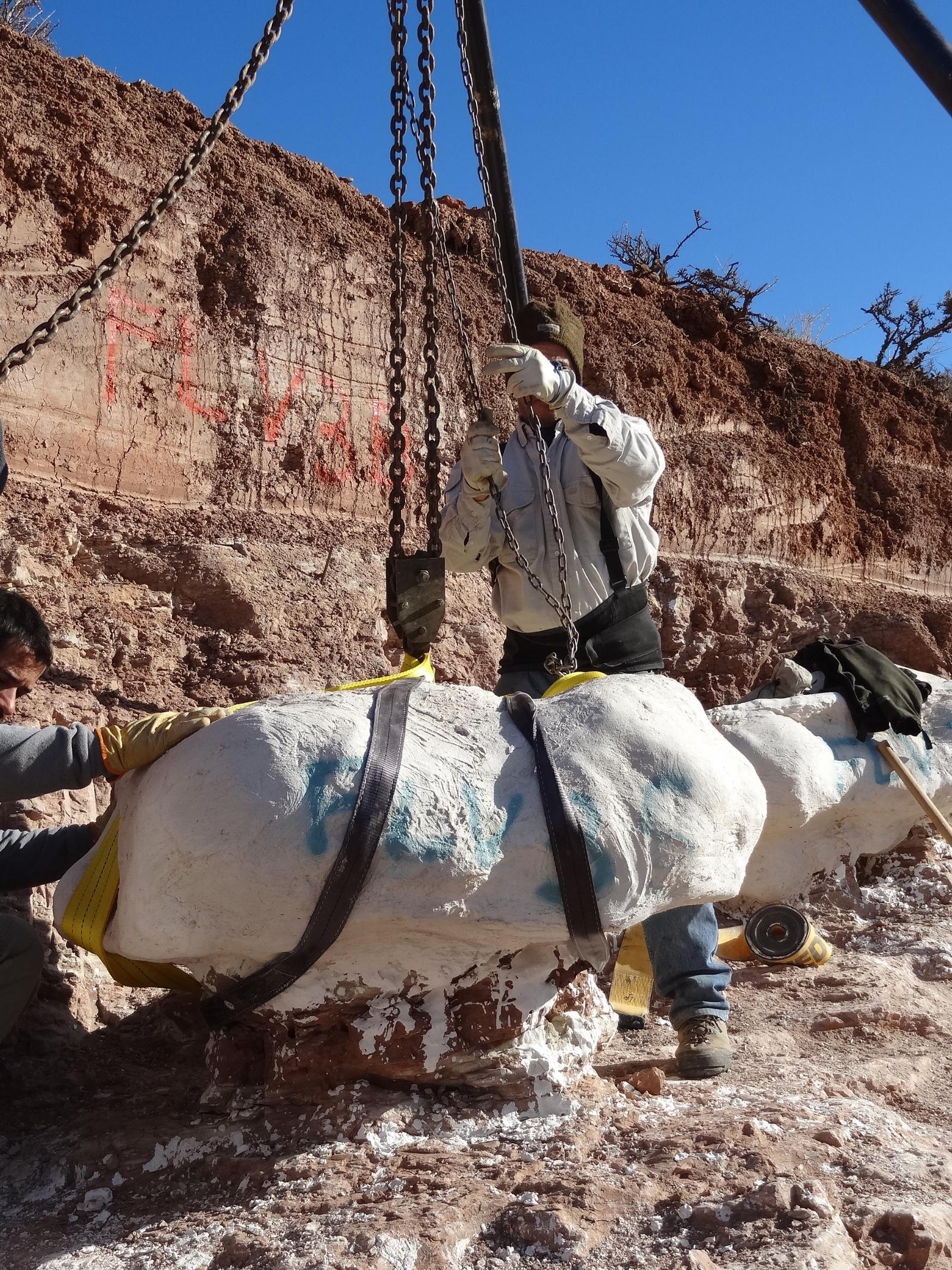 El dinosaurio m s grande del mundo fue argentino for Mundo del espectaculo argentino