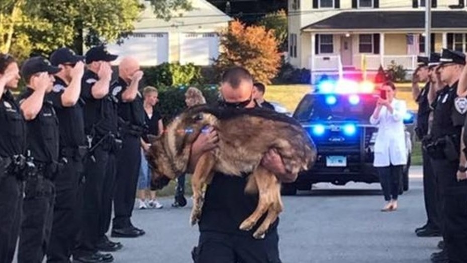 Perro policía enfermo terminal fue despedido con honores