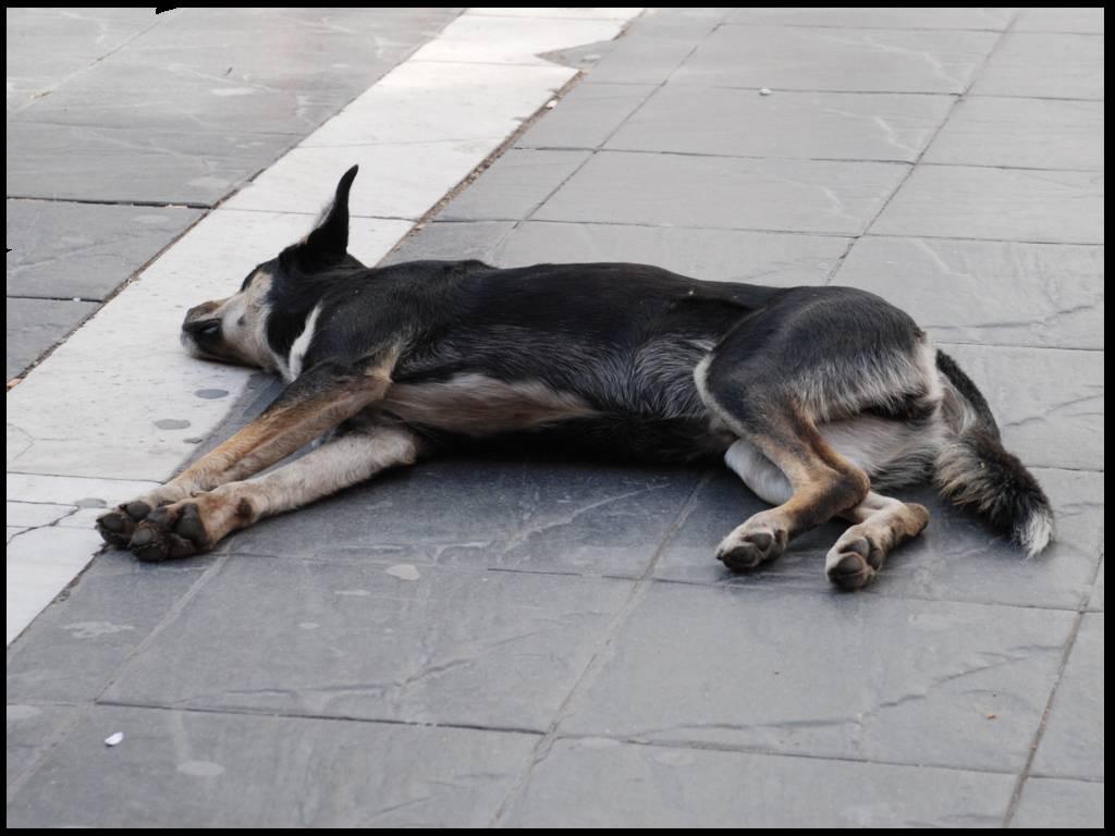 Dos perros muertos y una pelea entre vecinos