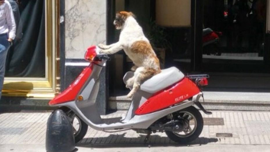 El perro en moto que revolucionó las redes sociales