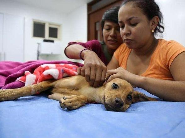 Caleños indignados por abuso contra perrita abandonada en Ciudad Córdoba — Abominable