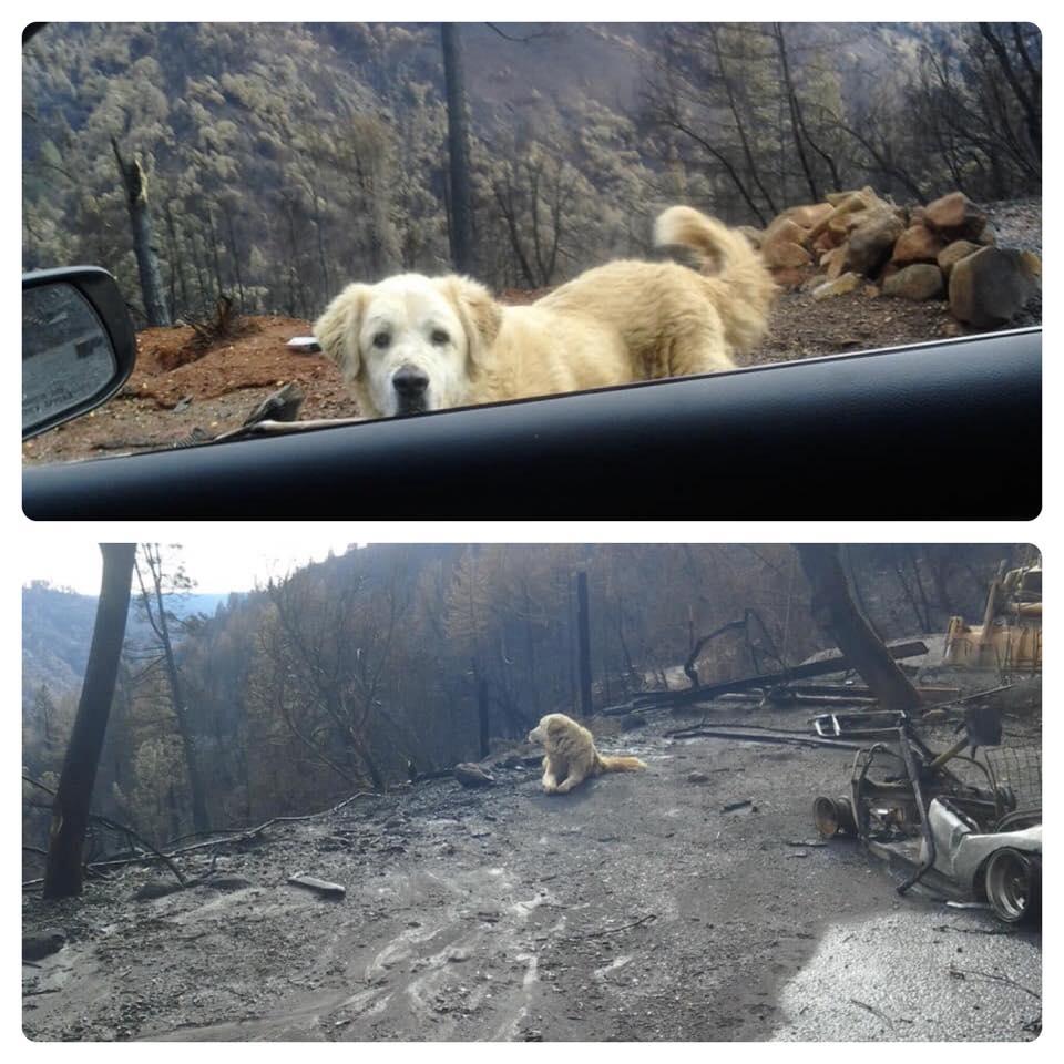 Perro esperó a su dueña afuera de su casa por un mes