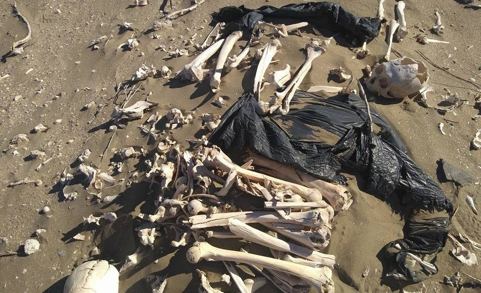 Turistas encontraron esqueletos humanos en una playa — Chubut