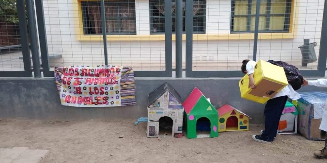 f030d9516 Para imitar: maestra sanjuanina creó casas para perros con sus ...