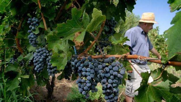 Por las heladas, el INV pronosticó para 2017 una caída de la cosecha de uvas