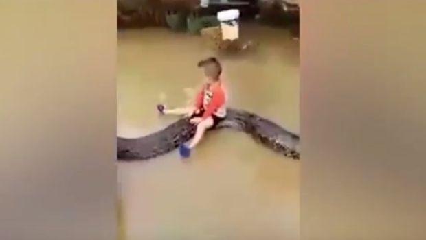 Video impactante: nene de 3 años monta una pitón de seis metros