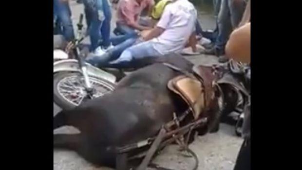 Hicieron competir un caballo con una moto, le quebraron las patas y nadie lo ayudó