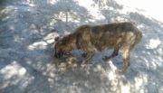 Proteccionistas resguardarán animales en próximas erradicaciones de villas