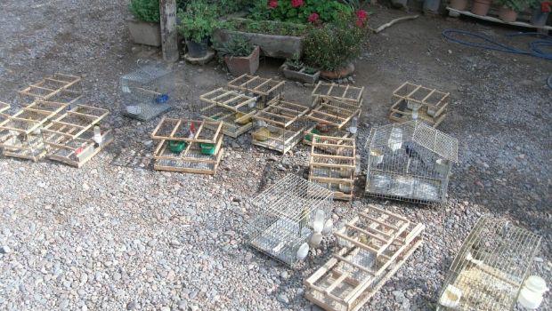 Decomisaron más de 30 aves de una casa en Pocito