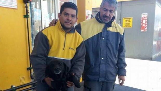 Una perra evitó que robaran una estación de servicio de Rawson