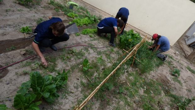 Con sentido de pertenencia: alumnos crearon una huerta en la escuela Pellegrini