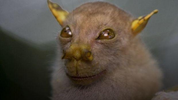 """""""Yoda"""", una nueva especia animal que se parece a personaje de Star Wars"""