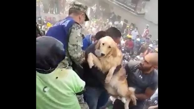 Video: un perro fue rescatado entre los escombros del terremoto en México