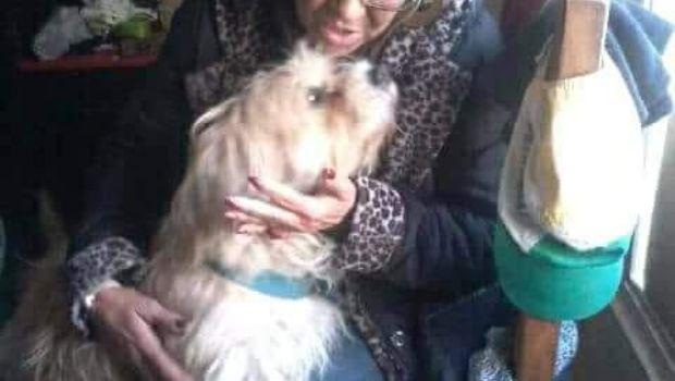 Perdió a su perro hace 2 años, lo vio por Facebook y lo busca desesperadamente