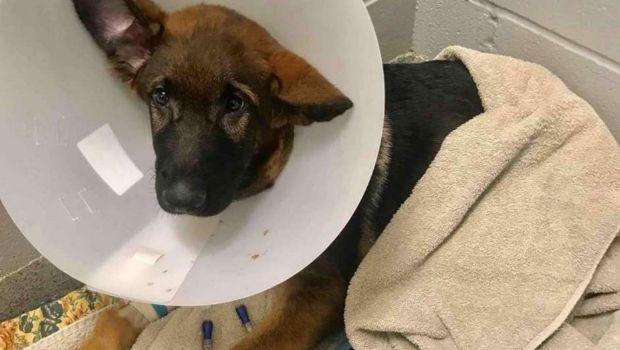 Le dio una paliza a su perro y recaudó plata para curarlo