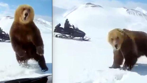 Video: despertaron a un oso que estaba hibernando