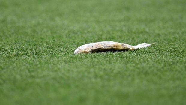 El increíble animal muerto que arrojaron al campo de juego de Inglaterra vs Croacia
