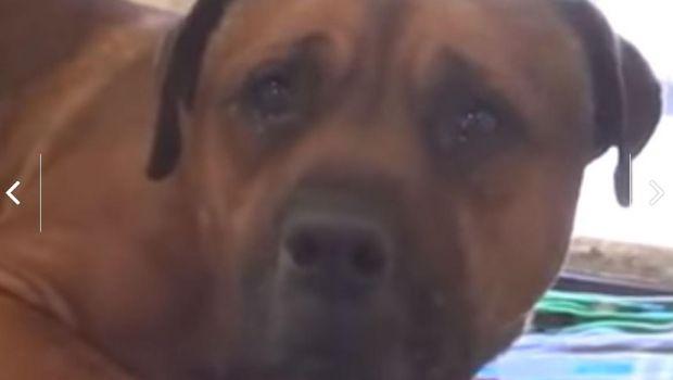 Viral: perro llora desconsoladamente tras ser abandonado y separado de su hermano