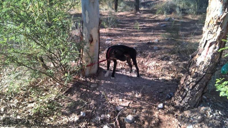 Crueldad extrema: abandonaron a dos perros en El Pinar y los ataron para que murieran de hambre