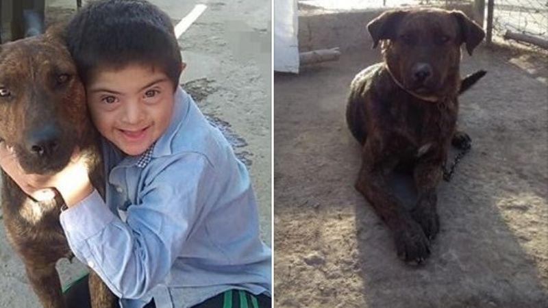 Envenenaron al mejor amigo de un niño con Sindrome de Down: Fido, su perro guía